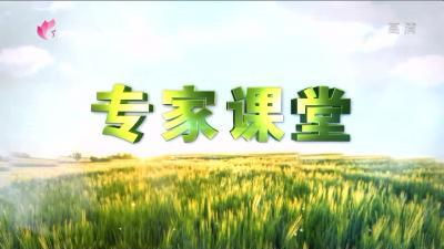 专家课堂:水稻插秧及大田管理技术