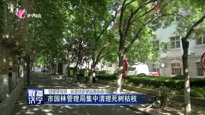 市园林管理局集中清理死树枯枝