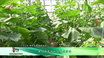 黄瓜霜霉病的发生与防治