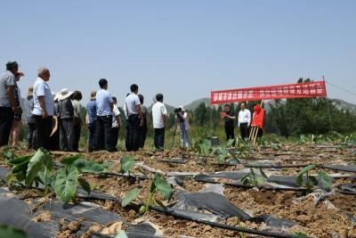 省农科院水肥一体化试验示范基地在邹城市张庄镇揭牌