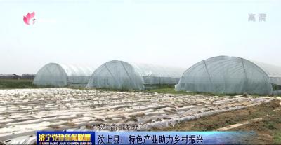 汶上縣:特色產業助力鄉村振興