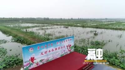 鱼台:15万亩生态养殖龙虾开捕上市
