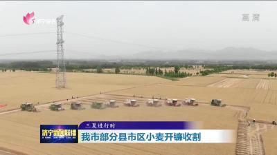 济宁小麦面积523.8万亩总产达240万吨 已收割15.1万亩