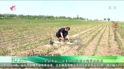 专家课堂:蒜套朝天椒的田间管理技术