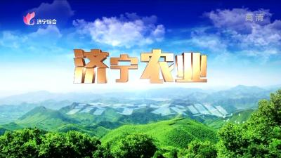 济宁农业——20200619