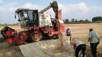 丰收了 嘉祥县68万亩小麦开镰收割