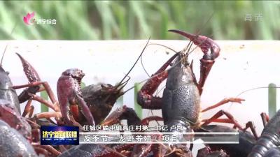 """""""龙虾书记""""的强村富民路"""