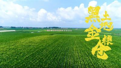 習近平吉林行丨首站來到梨樹縣國家綠色玉米生產基地