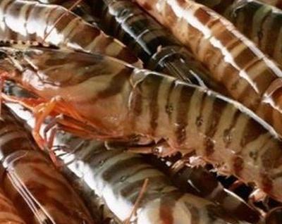 一年中吃虾最划算的季节来了!趁没涨钱赶紧买