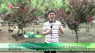 專家課堂:汶上蘆花雞放養條件下的飼養管理技術
