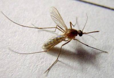 2020全国蚊子预报地图出炉 看看哪里蚊子最嚣张?