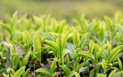 走向我们的小康生活 汶上:深耕沃土 物阜民丰