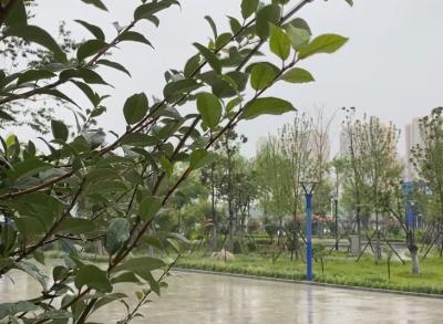 最新雨情!濟寧平均降雨量20毫米,最大降雨點50毫米