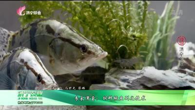 專家課堂:飼料鱖魚馴化技術
