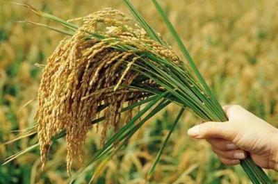 我国粮食生产连年丰收,为何还始终要有危机意识?专家告诉你原因