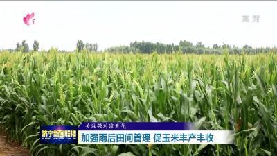 加强雨后田间管理 促玉米丰产丰收