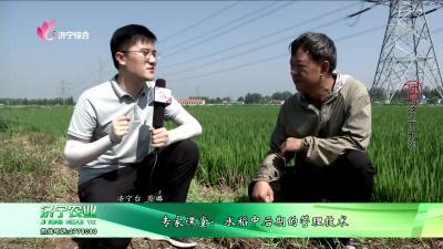 專家課堂:水稻中后期的管理技術