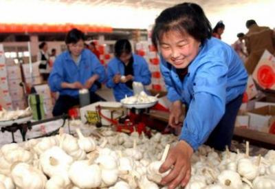 乡村振兴|大数据助力金乡大蒜产业转型升级