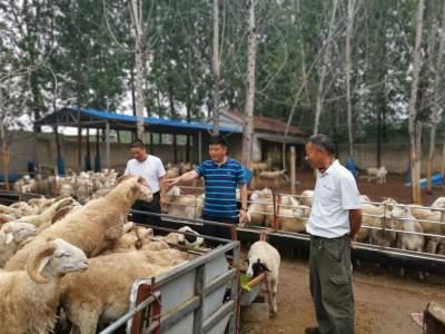 濟寧經開區:探索抱團發展新模式 促進村集體經濟共發展