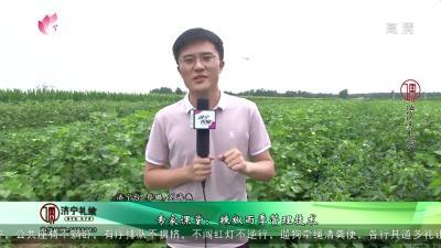 專家課堂:辣椒雨季管理技術