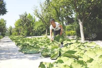 """靠湖不再傳統""""吃""""湖 微山湖漁家女的電商轉型之路"""