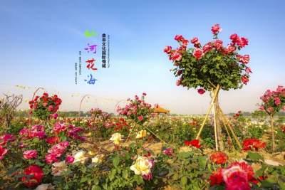 感恩教師節 曲阜仙河花海9月10日-12日教師免費玩