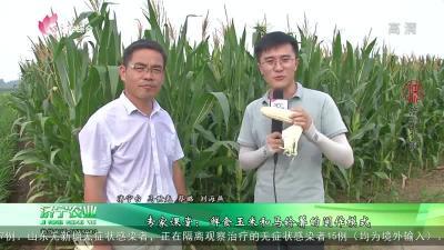 專家課堂:鮮食玉米和馬鈴薯的間作模式