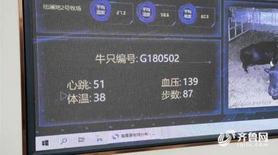 中国梦·黄河情|每一头牛都有自己的专属芯片!高青黑牛养殖用上数字高科技