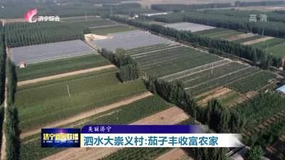 泗水大崇义村:270余亩茄子丰收富农家