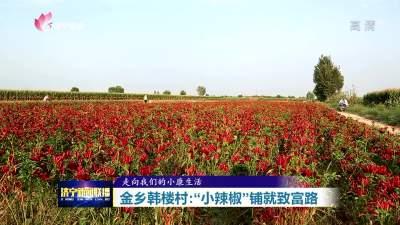 """走向我们的小康生活丨""""小辣椒""""铺就金乡韩楼村的致富路"""