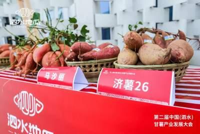 一县一业|打造泗水地瓜品牌 助力乡村产业振兴