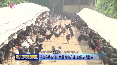汶上县杨店镇:做强特色产业 助推农民致富