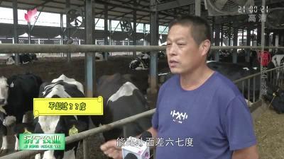 梁山:自由式發酵臥床——開啟養牛新模式