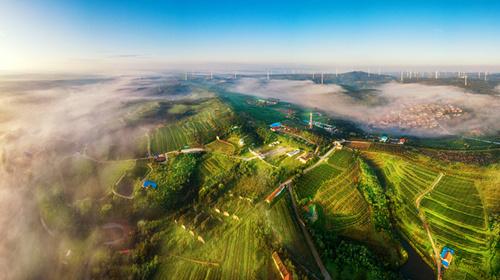 现代农业发力 烟台大户庄园描绘乡村振兴壮美画卷