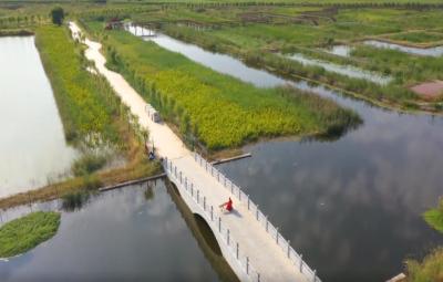 初秋景色美如畫 魚臺柳清湖生態濕地公園等你來打卡