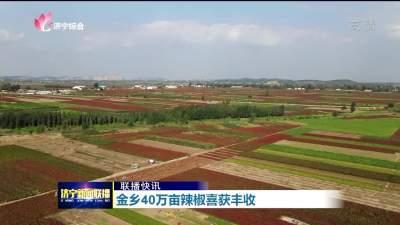 金鄉40萬畝熱辣紅椒收獲季 喜笑顏開迎豐年