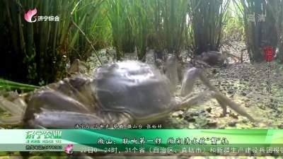 """《微山:敲响第一锣 微湖清水献""""蟹""""礼》"""