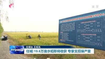 任城19.6万亩水稻迎收获季 专家支招保丰产丰收