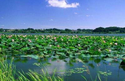 南四湖生态保护和高质量发展规划专家论证会举行