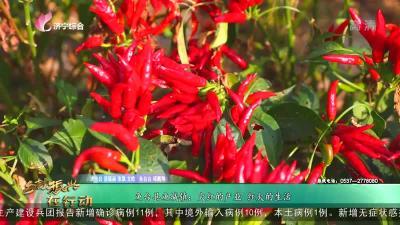 魚臺縣魚城鎮:火紅的產業 紅火的生活
