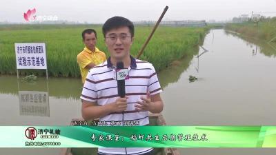 专家课堂:稻虾共生后期管理技术