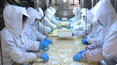 大蒜有了可追溯体系!大数据助力金乡大蒜产业转型升级