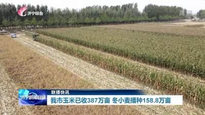 截止10月14日,31599com玉米已收387万亩 冬小麦播种158.8万亩