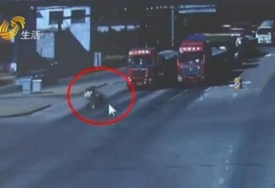 监控拍下惊险一幕!梁山男子骑车带着女儿闯红灯,爷俩被货车撞翻