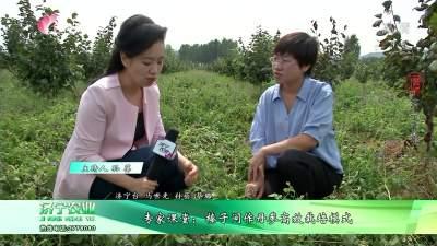 专家课堂:榛子间作丹参高效栽培模式