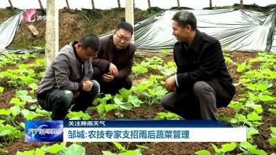 雨后蔬菜咋管理?鄒城農技專家來支招