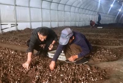 """鄒城太平鎮發展特色產業 讓貧困群眾""""錢袋子""""鼓起來"""