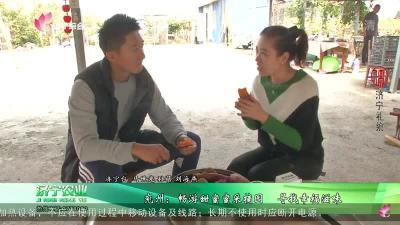 兖州:畅游甜蜜蜜采摘园 寻找幸福滋味