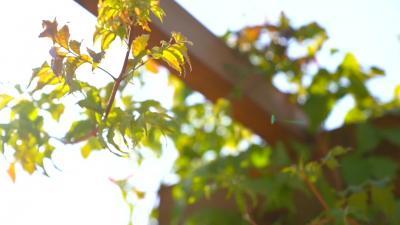 暖陽下的芬芳 詩情畫意桐花秧