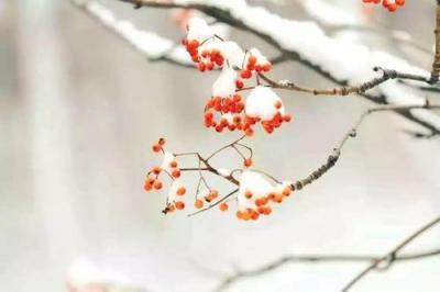 """22日4時40分""""小雪"""":寒風日勁,菊萎東籬"""